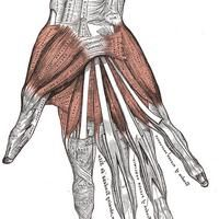 arthron kompleks recenzije