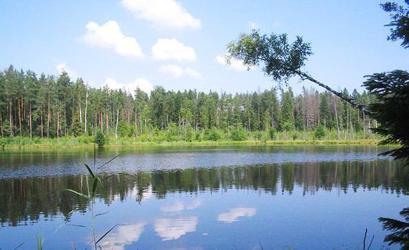 Природа Беларуси – уникальное наследие реликтовой экосистемы