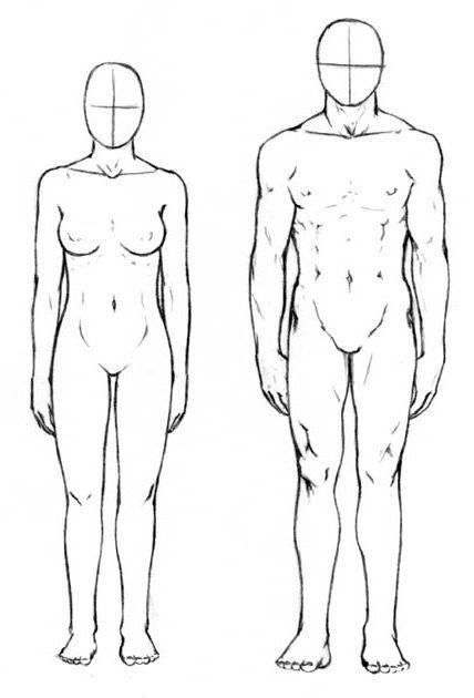 proporcije ljudskog tijela