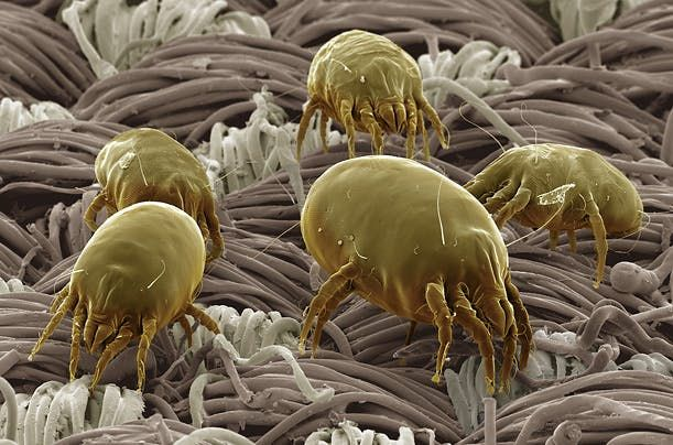 Pet parazita