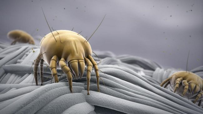 Parazit na tkanini