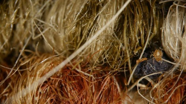 Krpelji u vuni