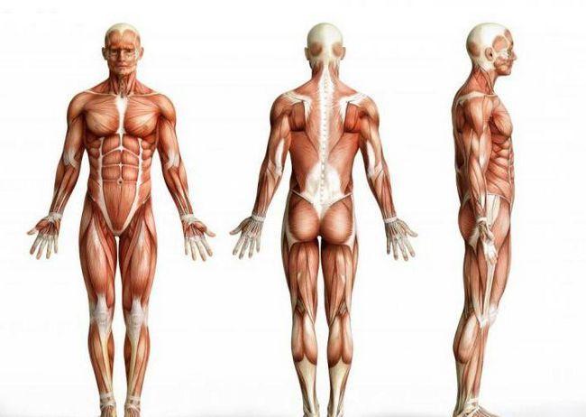 pojas mišića glave