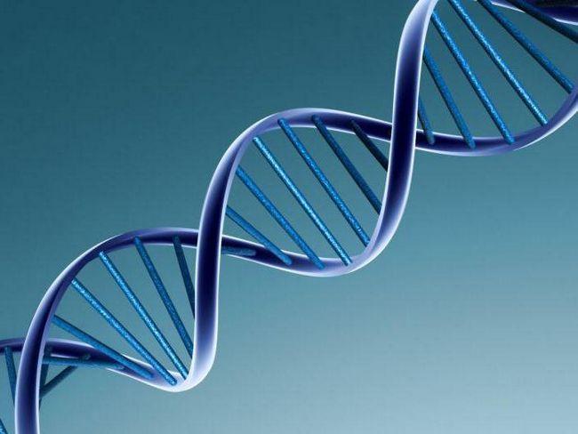 replikacija u biologiji je