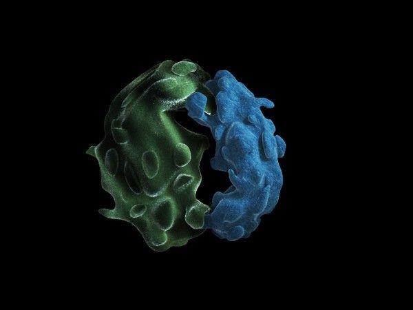 struktura ribosoma
