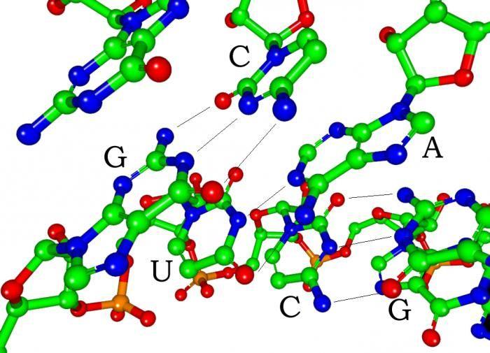 strukture RNA