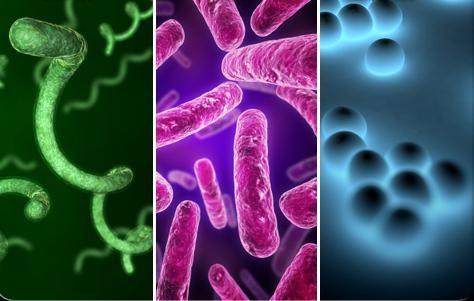роль бактерий в промышленности
