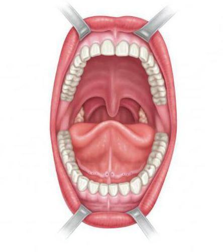 anatomija usne šupljine