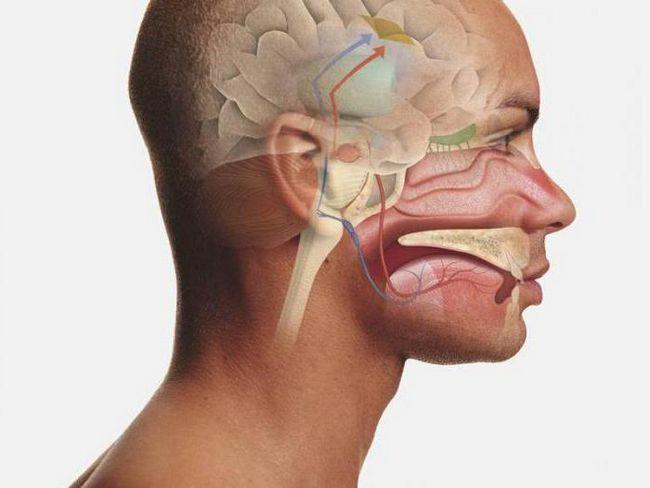 anatomija fotografije usne šupljine
