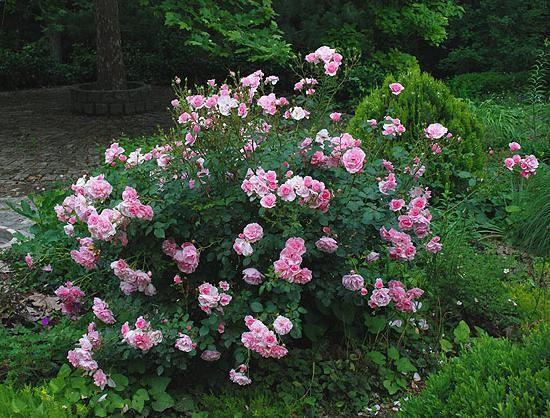Rosa park Martin Frobisher