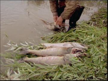 Рыбалка в Хакасии: фото и отзывы. Реки Хакасии: рыбалка