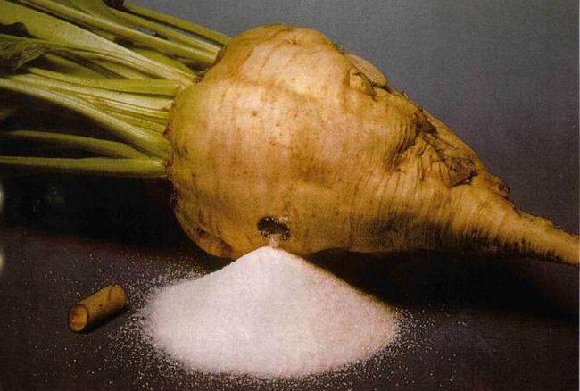 šećerna repa