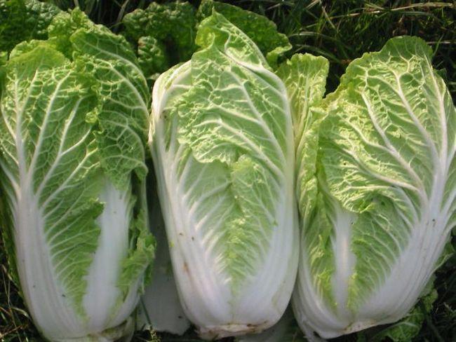salata od Pekinga s kobasicama
