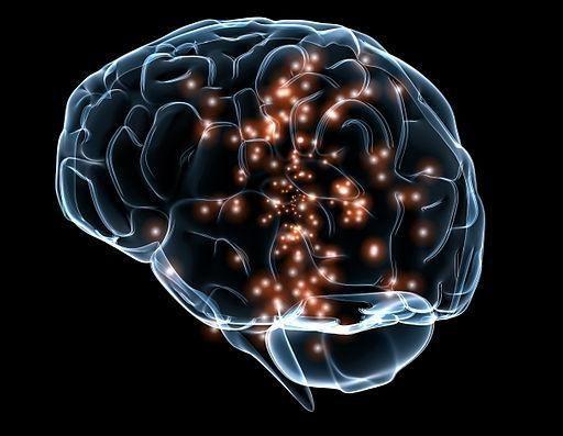 bijela tvar mozga