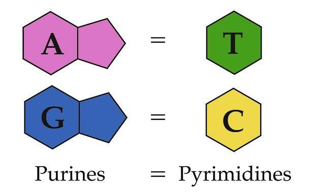Sličnosti DNK i RNA tablice