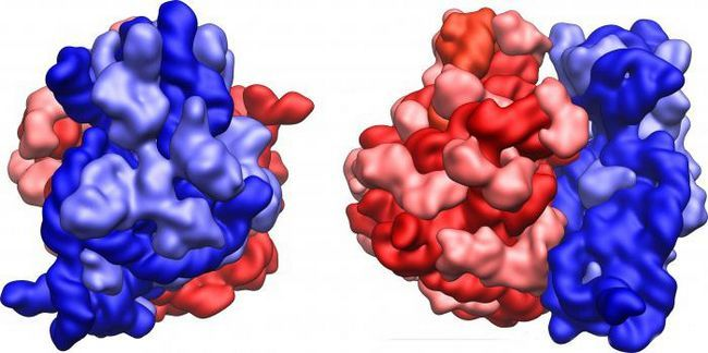 sastav DNA i RNA