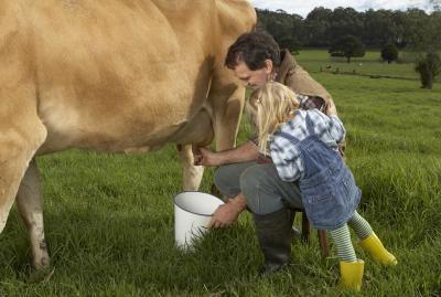 koliko mlijeka daje kravu dnevno
