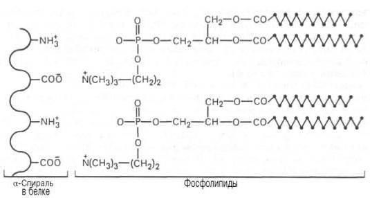 sastav složenih proteina