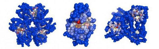 definicija složenih proteina