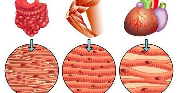 što rezanje organa