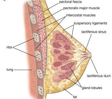 bradavice tijekom trudnoće