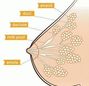 bradavice na ranu trudnoću