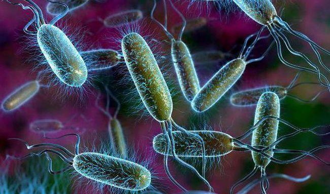 što je uobičajeno kod biljnih i bakterijskih stanica