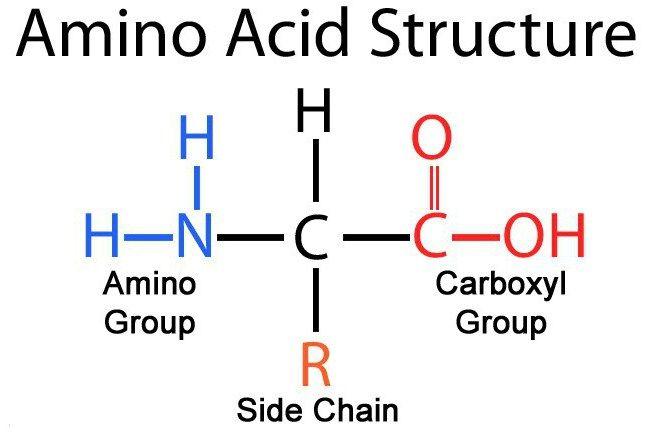klasifikacija aminokiselina
