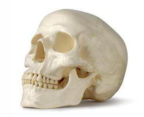 strukturu ljudske lubanje