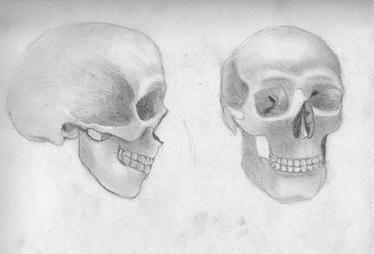 struktura ljudske lubanje u slikama