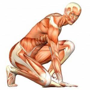 funkcija mišića