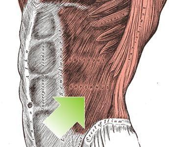 funkcija ljudskih mišića
