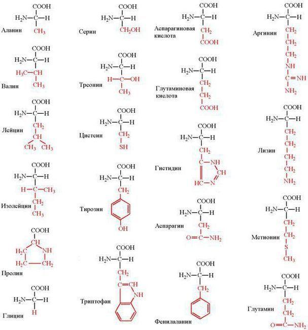 struktura proteina kvarterne strukture