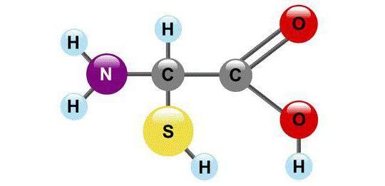primarna sekundarna tercijarna kvaternarna struktura proteina