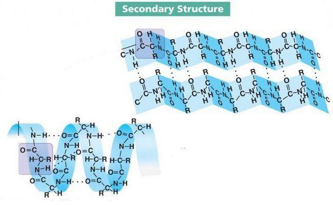 tercijarna kvaternarna struktura proteina