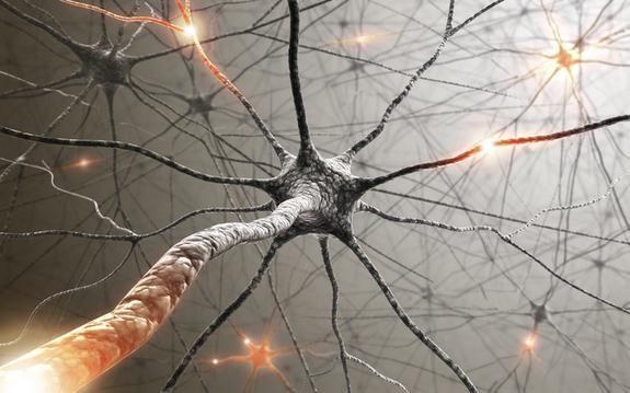 mijelinizirana živčana vlakna