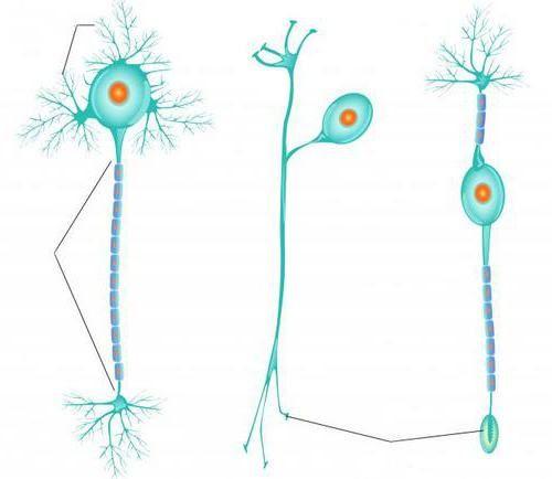 uzbuđenje živčanih vlakana
