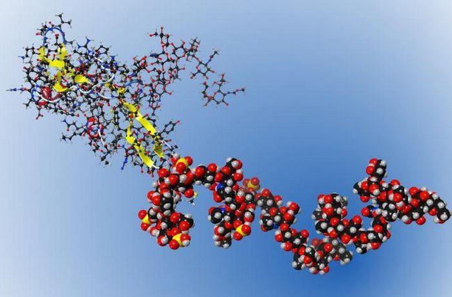 химическое строение углеводов