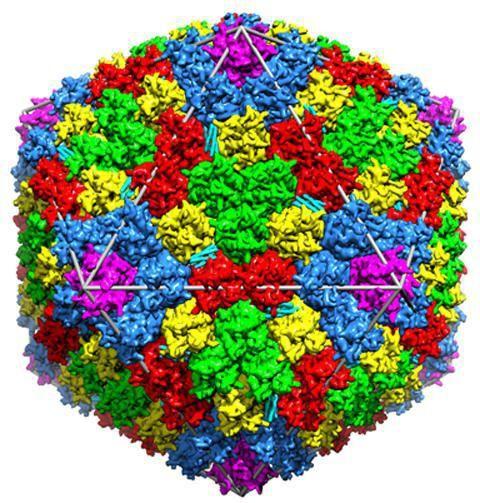 što su virusi