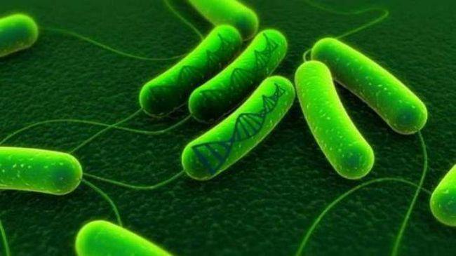 gdje postoji transkripcija biologije
