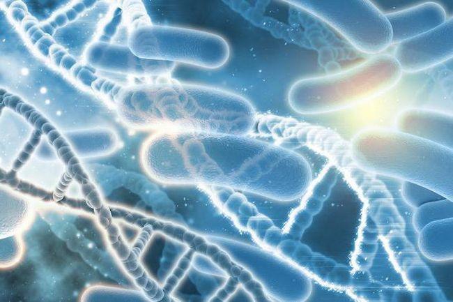 molekularna biologija transkripcije