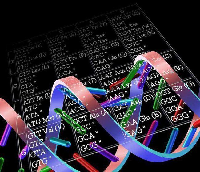 funkcionalna jedinica genetskog koda