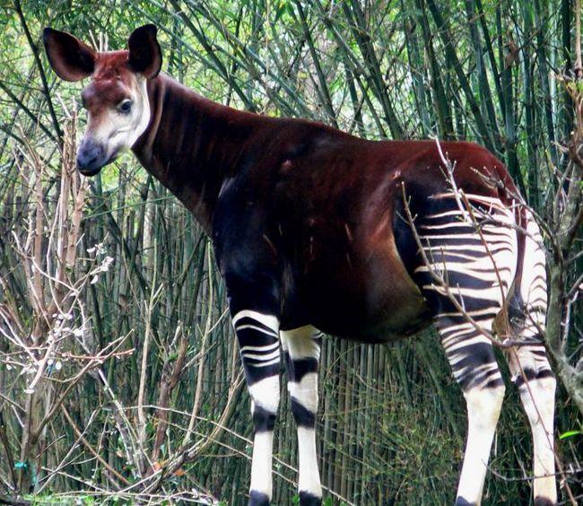 Удивительные животные нашей планеты: список, фото. Самые удивительные животные в мире: топ 10