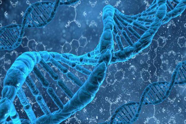 DNA iz rnk je različita u sadržaju