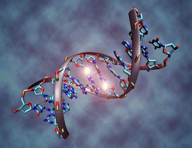 analiza DNA