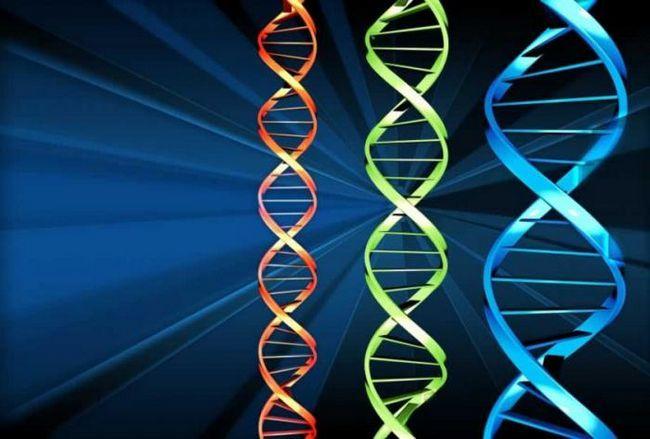 nukleotidni sastav DNA