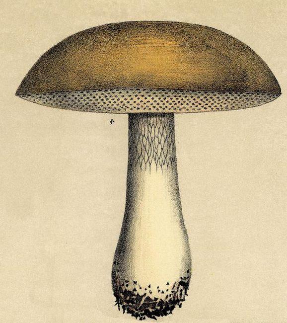 kako privući gljive u fazama