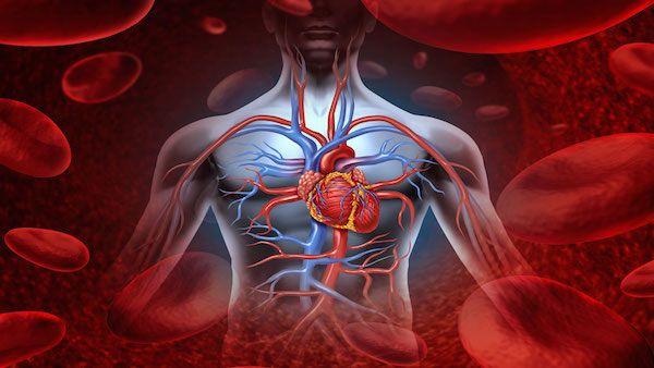 Arterije i vene