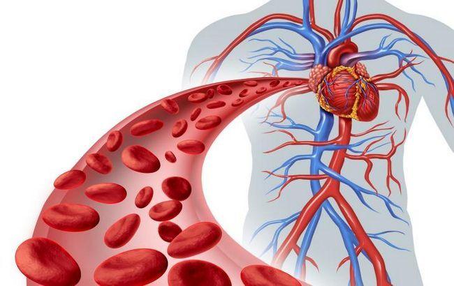 Arterije i vene velike kružnice cirkulacije