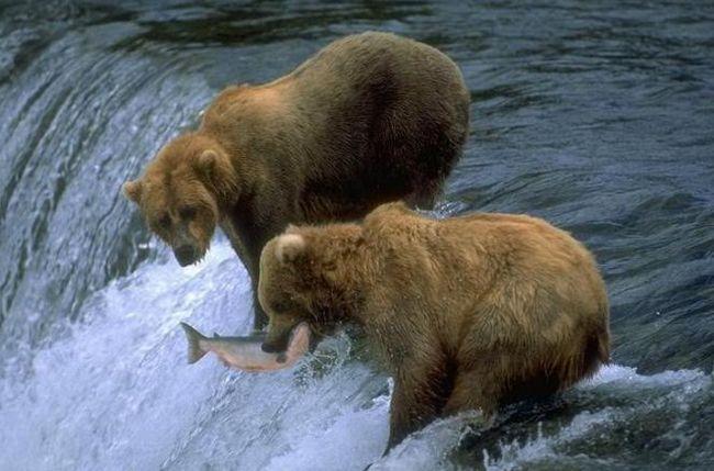 взаимодействие видов в экосистемах